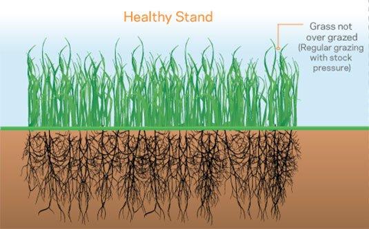 healthy pasture management